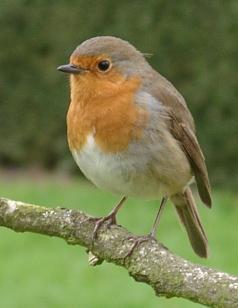 Zee Ezel 588 Robin